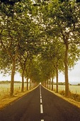 Tree-lined country road in Provence, France.