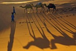 Camels in Sahara sand dunes at Erg  Chebbi, Morocco, at sunset