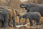 Elephants at watering hole in Etosha National Park in Namibia