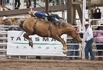 Bronc going airborne in the Bareback event at the 100th Anniversary Calgary Stampede 2012 rodeo competition.