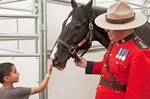 Young man meeting Hector, Royal Canadian Mounted Police horse, in stables at the Calgary Stampede 2012.