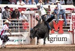 A drooling bull lifts off in the Bull Riding competition at the Calgary Stampede 2012.