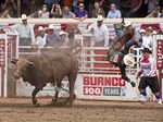 Bull Riding contestant is tossed before 8 seconds expires at the Calgary Stampede 2012.
