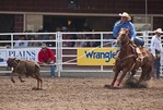 Tie-down Roping competition at the Calgary Stampede 2012.