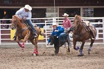 Steer Wrestling at the Calgary Stampede 2012.