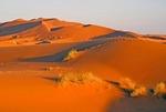 Sahara Desert dunes at Erg Chebbi, Morocco