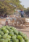 Farmer unloading watermelons from bullock cart on roadside near Mandalay.