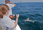 Alabama Gulf Coast charter fishing with shark on line.