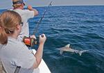 Alabama Gulf Coast charter fishing with shark on line.