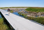 Boardwalk through salt marsh on West Ship Island of Gulf Islands National Seashore in Gulf of Mexico.