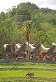 Village in Tana Toraja (Torajaland) South Sulawesi, Indonesia.