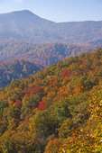 Great Smoky Mountains National Park near Little River Road in autumn.