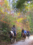 Horseback riding in autumn in DuPont State Forest, North Carolina, site of Hunter Games films.