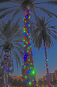 Christmas decorated plam tree in Orlando, Florida.