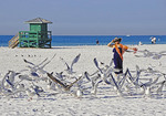 Sarasota's Siesta Key Beach, woman with seagulls.