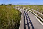 Everglades National Park boardwalk on Anhinga Trail at Royal Palm.