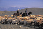 Xinjiang shepherds on horseback with sheep and goats with Tianshan mountains in background.