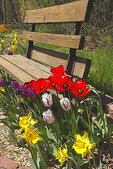 Spring flower art - park bench