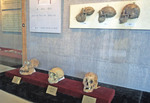 Zhoukoudian Exhibition Hall with Peking Man skulls