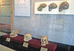 Zhoukoudian Exhibition Hall with Peking Man skulls