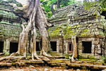 Cambodia: Ta Prohm temple ruins with fig tree roots growing on wall