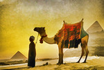 Man with camel at Great Pyramid of Giza at sunset