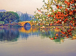Spring blossoms along West Lake in Hangzhou, Zhejiang, China:
