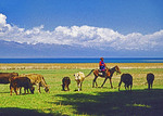 Kyrgyzstan: Kyrgyz woman on horseback herding cattle along shore of Lake Issyk-Kul (Ysyk-Kol), 2nd highest in world