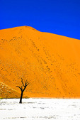 Namibia: Sossusvlei dune with dead tree in Dead Vlei salt pan at Naukluft Park