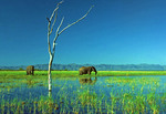 Elephants at Matusadona National Park on Zimbabwe shore of Lake Kariba.