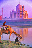 India: Taj Mahal with man and boy watering camel in the Yamuna River.