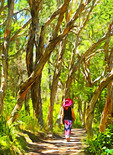 Walk in the woods on Korogoro Track at Hat Head, NSW, Australia.