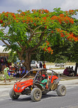 Custom car on main downtown street bneath red-flowering Christmas tree in Port Vila, Vanuatu.