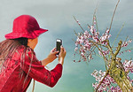 Photographing the spring blossoms along Xuanwu Lake in Nanjing.