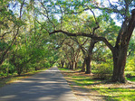 Oak Avenue drive into the Magnolia Plantation & Gardens at Charleston, South Carolina.