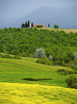 Chapel and farmhouse above rapeseed field in bloom in spring in the Val d'Orcia of Tuscany near Pienza.