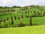Winding cypress-lined swithback road at the Tuscan town of La Foce in spring.