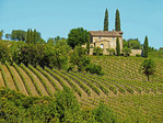 Tuscan stone farmhouse with vineyard near Montalcino, Italy.