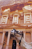 Camel in front of The Treasury at Petra.