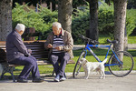 Elderly men playing cards in park with dog observing in Cetinje, Montenegro.