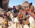 Camels at Petra.