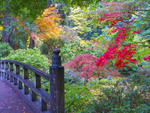 Wooden bridge at Portland Japanese Garden in autumn.