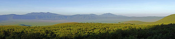 Panoramic of Ngorongoro Crater in morning light.