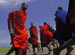Maasai warriors dancing in village near Ngorongoro Crater in Tanzania.