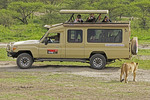 Tourists photographing lion from safari van in southern Serengeti Plains of Tanzania.