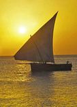 Traditional dhow sailing at sunset off shore of Stone Town In Zanzibar.
