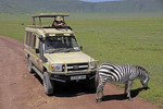 Tourist photographing zebra from safari van in Serengeti National Park, Tanzania.