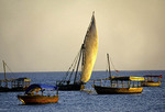 Traditional dhow sailing in Stone Town harbor of Zanzibar.