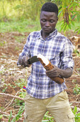 Farmer peeling cassava root with machete on farm of Nshenyi Cultural Center near Kitwe, Uganda.