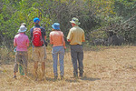 Tourists Rhino trek on foot viewing Southern White Rhino in shade at Ziwa Rhino Sanctuary in Uganda.